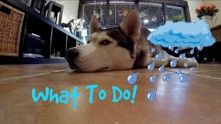 what to do with your dog on rainy days