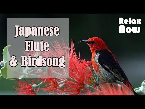 💠(2 HOURS) Japanese Flute, Birdsong: Zen Meditation Music, Relaxing Sleep Music, Work Music