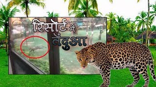 Leopard Entered The MP Tourism Board Resort At Turiya Gate Of Pench National Park   Talented India