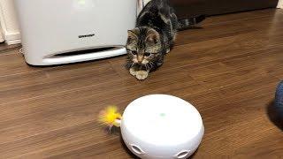 自動猫じゃらしにビビってたのに急に飛びついて来る猫w thumbnail