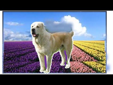 У собаки болят суставы чем лечить в домашних условиях