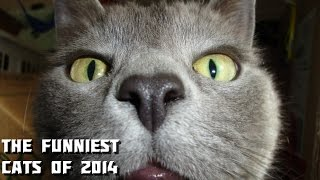 The Funniest Cats of 2014 Compilation - Merry Christmas with funny cats :)