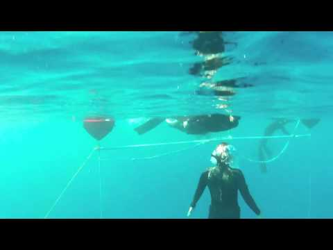 FII Level 1 Freediving Dive