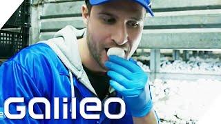 Der harte Job eines Pilzpflückers | Galileo | ProSieben