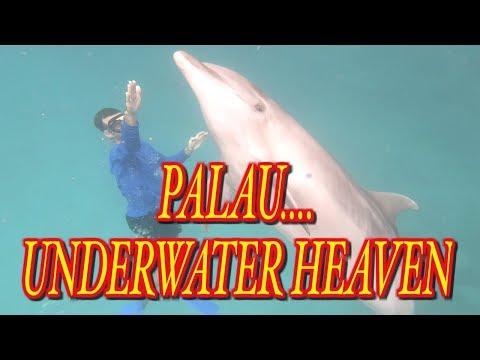 Palau Underwater Heaven
