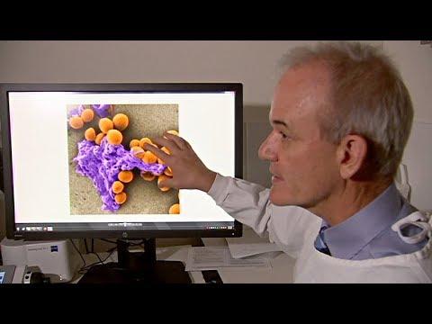 В Австралии стоят на пороге открытия лекарства от «супербактерий» thumbnail