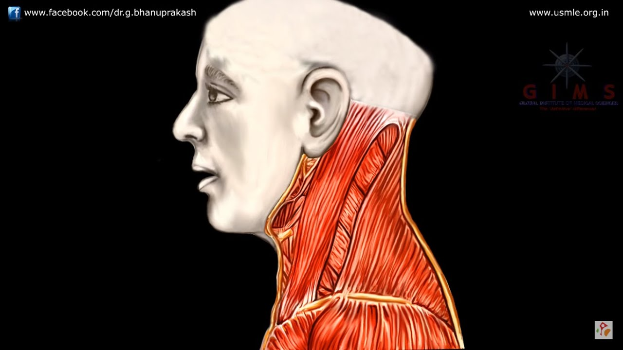 Ansa Cervicalis Animated Anatomy Video Lecture Youtube