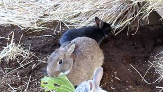 2010.1.7ウサギ・羊農園の様子です。生まれた赤ちゃんが来ましたよ。ダ...