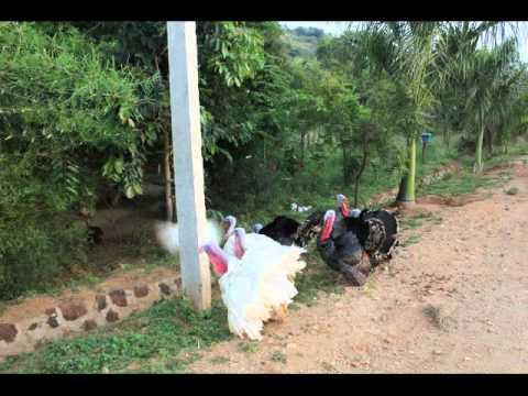 Farm house projects near bangalore