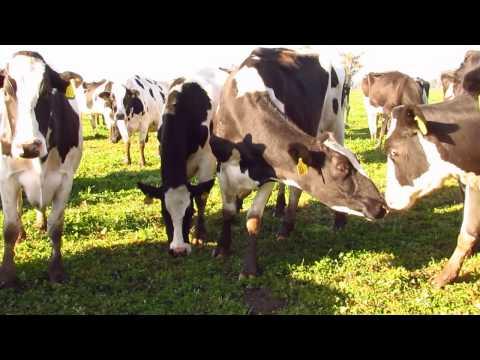 Dairy in Argentina
