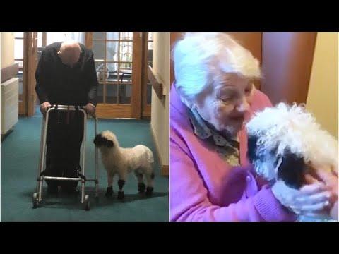 L'agnellino arriva a sorpresa nella casa di riposo: la ...