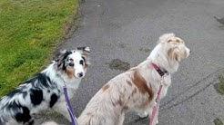 Erklärung zum Aufbau: Anti Jagd Training mit Hund (mit Liv, 7 Monate)