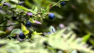 Zuberec Penzion u Michala pod Roháčami (Official video)