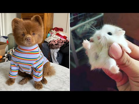 Cute Baby Animals ❤️ Funny Cats and Dogs Compilation #7