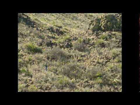 Lion Country- Tracking the elusive Mountain Lion - Texas Parks and Wildlife [Official]