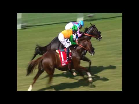 Florida Thoroughbred Week 08/27/16