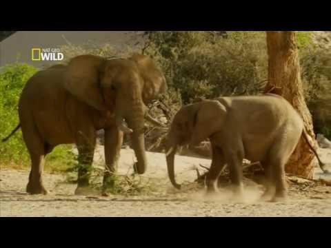 Conheça o Mundo Selvagem na África - TV Rota Notícias.