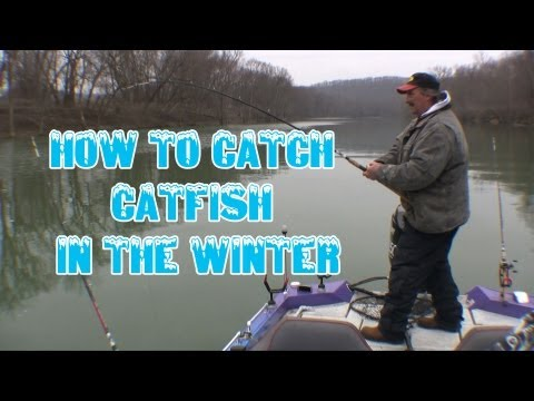 How To Locate And Catch Wintertime Catfish: *tips And Techniques*