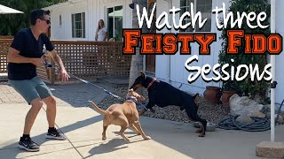 Watch three aggressive/reactive dogs meet Prince and the group