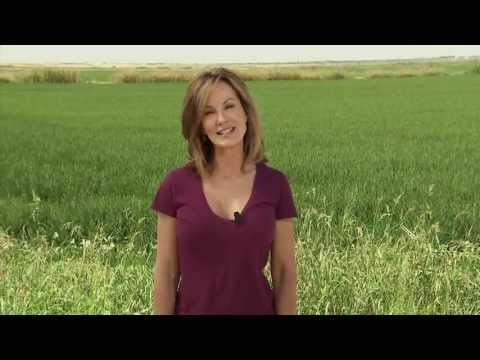 Rice - America's Heartland:Episode 904