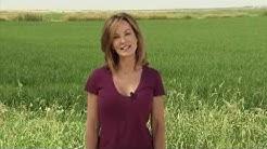 Rice - America's Heartland: Episode 904
