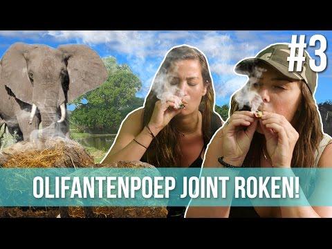 Roken olifantenpoep joint! | Serena & Laura #3 - Wander Zanzibar