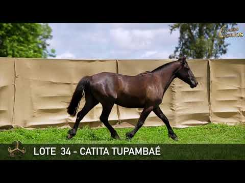 LOTE 34   CATITA TUPAMBAÉ