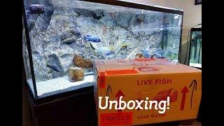 Time to Unbox Living Aquarium Fish....Im Over My Limit