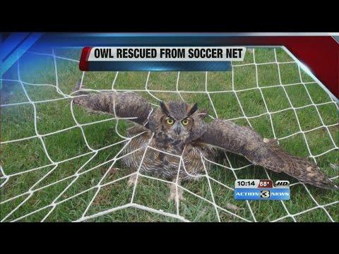 Nebraska Humane Society rescues owl from soccer net