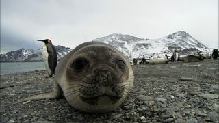 Repeat youtube video Friendliest seals ever? | Antarctica Ep2