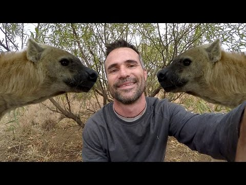 Hyena Rivalry!! | The Lion Whisperer