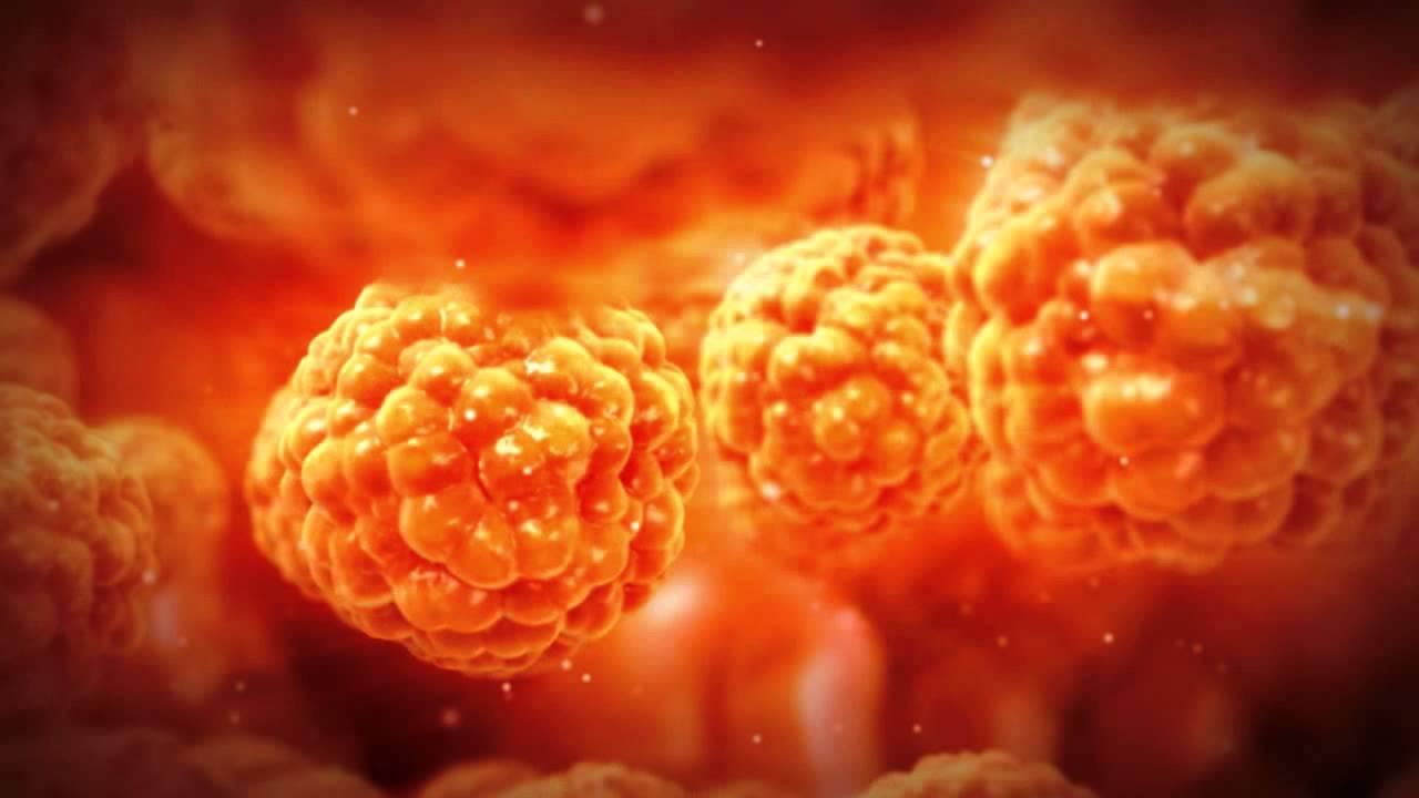 Fat Cells Inside Human Body Behavior Youtube