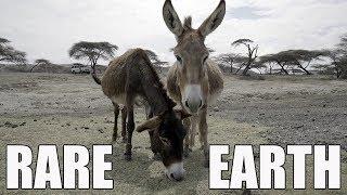 China's Donkey Show
