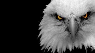 Самые Быстрые Птицы в МИРЕ