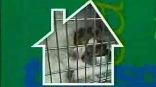 Animal Hospital theme