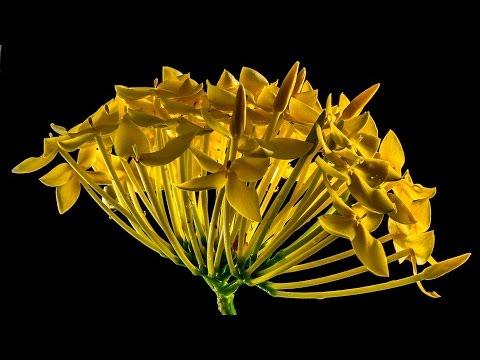 รูป ดอกไม้ สวย ๆ - YouTube