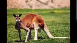 National Anthem of Australia (Instrumental Version)