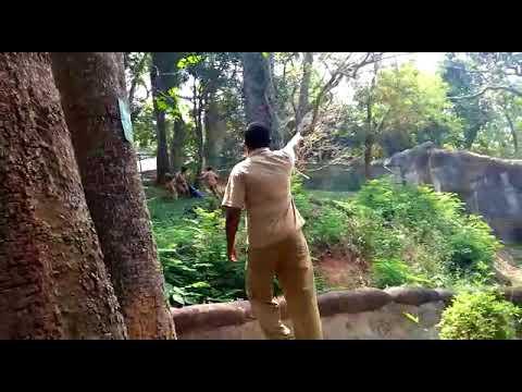 Man jumps into lion enclosure in Thiruvananthapuram zoo, rescued