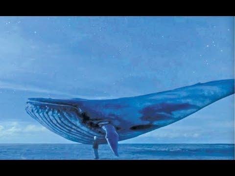 الحوت الأزرقتحول بسبب لعبة الكترونية إلى وحش مفترس يودي بحياة الأطفال  - نشر قبل 1 ساعة