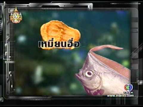 thelist ที่มาของกระเพาะปลา