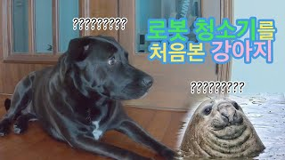 로봇 청소기를 처음 본 강아지 (feat. 청소기의 고…