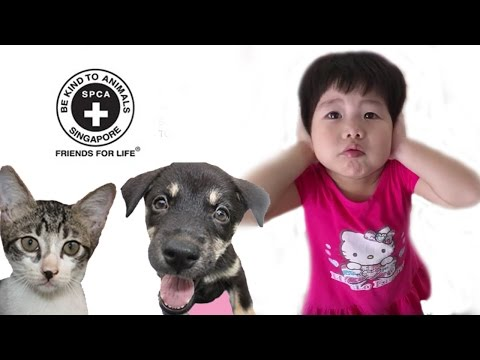 SPCA Singapore - Visit to Society For The Prevention Of Cruelty Of Animals | Outdoor Fun