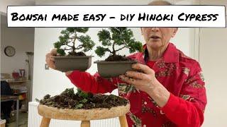Bonsai Made Easy - DÏY Hinoki Cypress