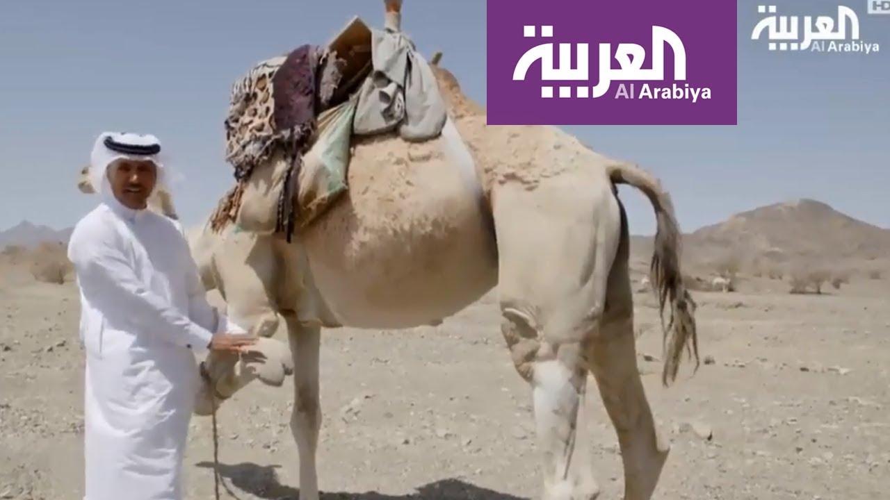 على خطى العرب: القصواء وأحفادها-الحلقة 14 - YouTube