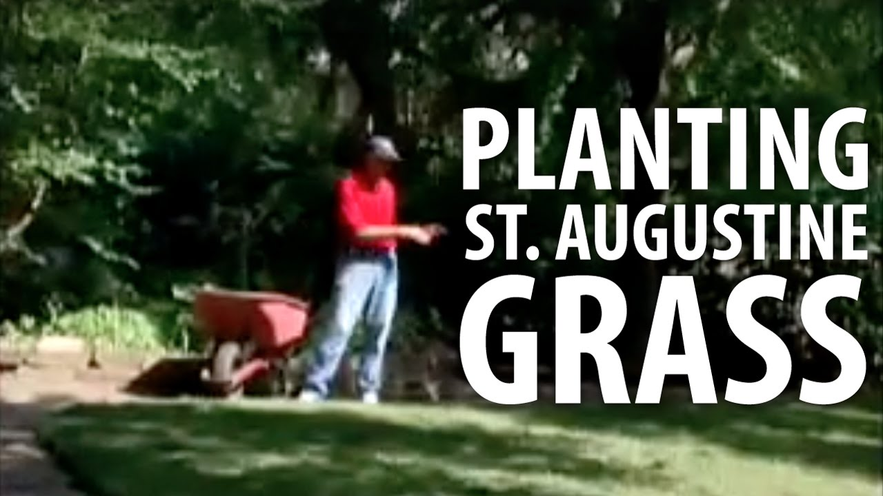 Planting St Augustine Gr The Dirt Doctor