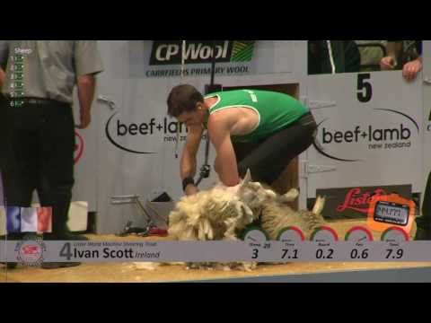 World Machine Shearing Final