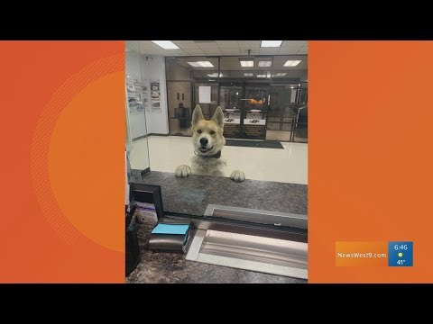 Viral dog escapes owner to local police department
