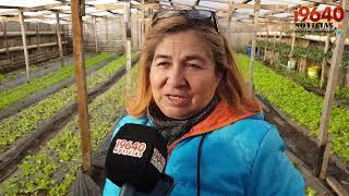 Video: Las huertas, una salida laboral que crece