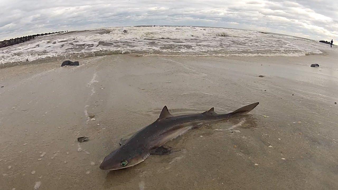 Shark at jersey shore youtube for Shark fishing nj