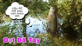 CÂU TOÀN RÔ MỀ ĐẦY TRỨNG, SAU CƠN MƯA LỚN  // Go fishing after heavy rain